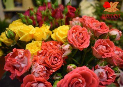 fleureve - roses spray 03